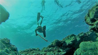 Spearfishing Huatulco